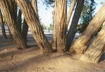 Trees, Hesperia Lake