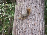 Squirrel on Tree