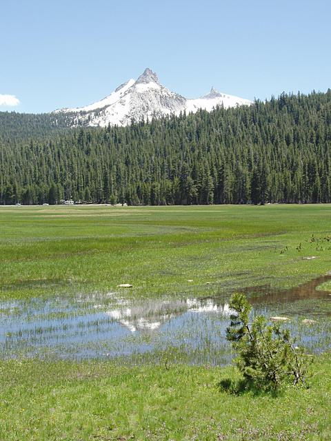 Cathedral Peak from Tuolumne Meadows