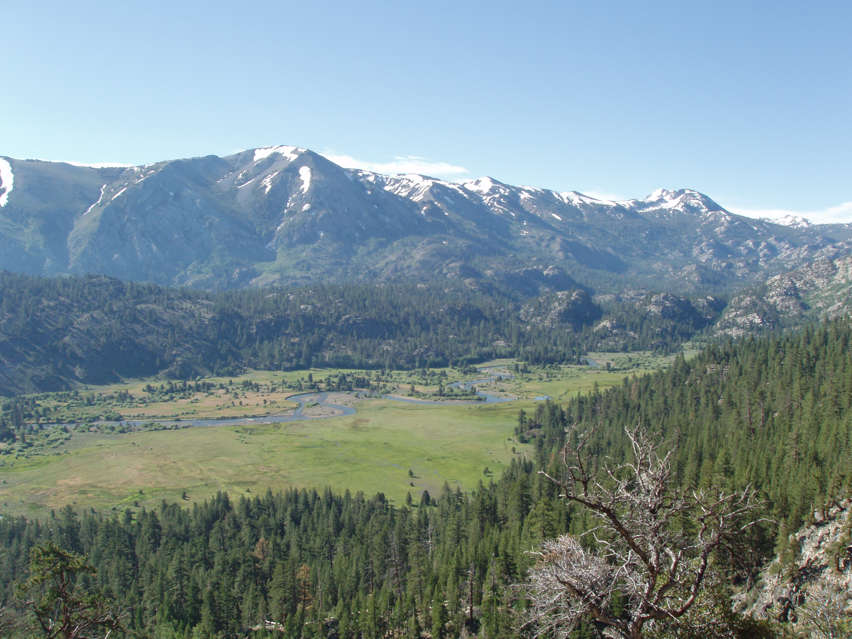 Leavitt Meadow