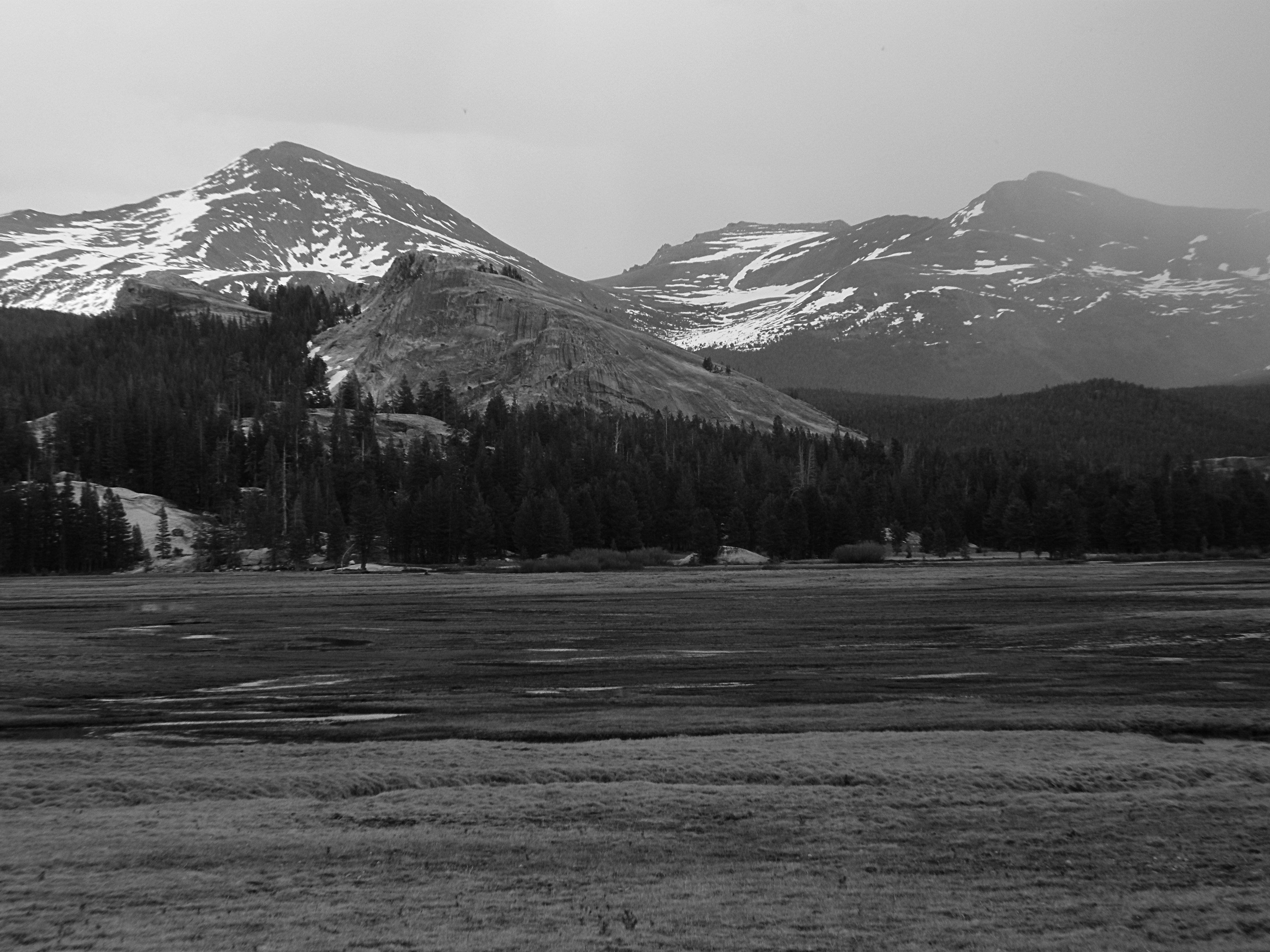 Rain at Tuolumne Meadows B&W