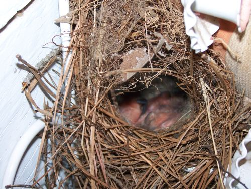 In Their Nest