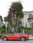 vette with tree