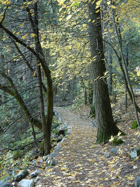 Merced River Trail near Fern Spring