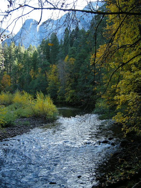 Fall color along the Merced River in Yosemite Valley