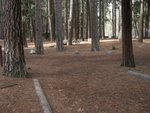 Yosemite Lower Pines Campground Site 44