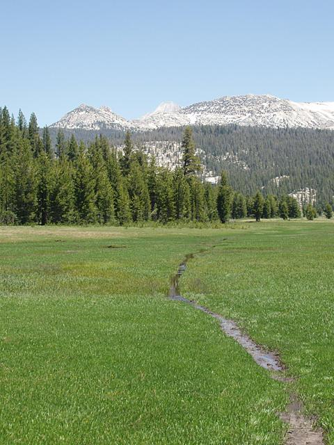 Wet Trail at Tuolumne Meadows in the Spring