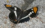 Butterfly on Granite