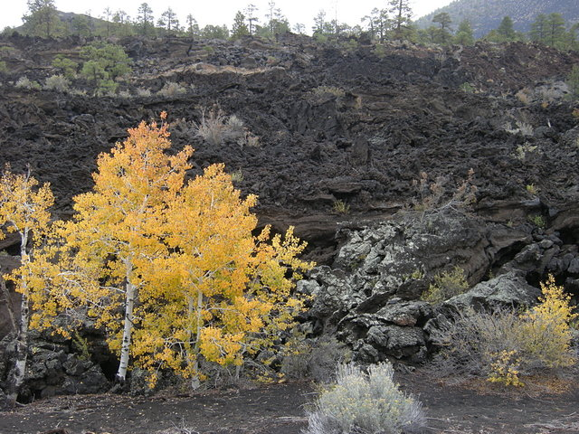 Aspen and Lava at Sunset Crater Volcano National Monument