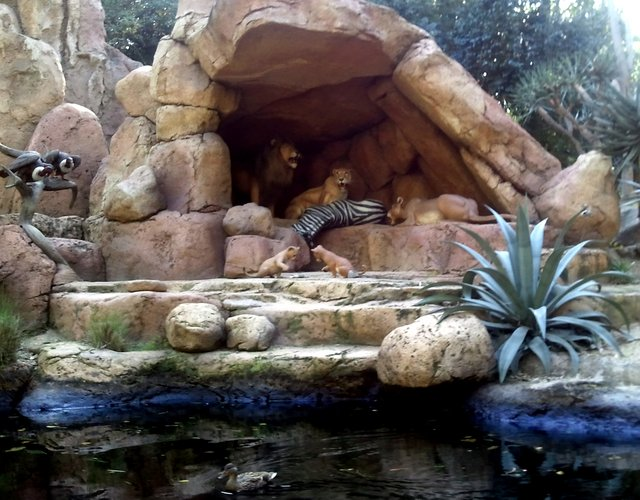 Jungle Cruise Lions