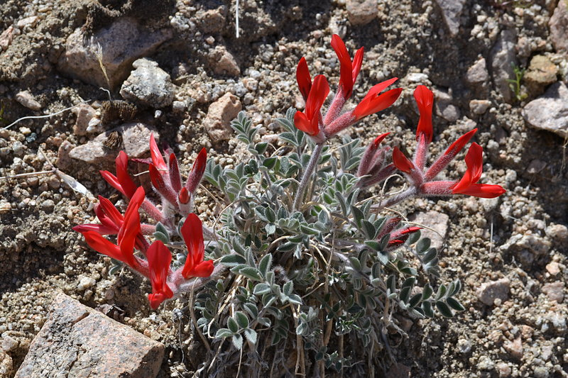 Red Flowers along the Boyscout Trail