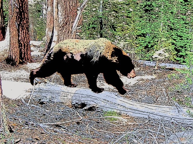 Cartoonized Yosemite bear
