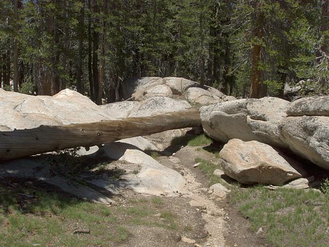 Use Trail to the Tuolumne River