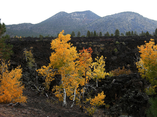 Fall Color at Sunset Crater National Monument