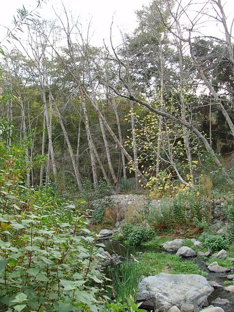 Riparian Environment in San Dimas Canyon