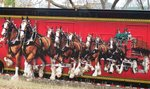 Marshall, Texas, Clydesdales