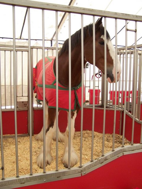 Clydesdales, Marshall, Texas