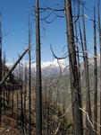 Burned Trees and Snowy Peaks