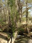 Owens Valley Creek and Trees