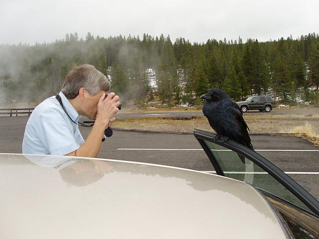 The raven owns the car?