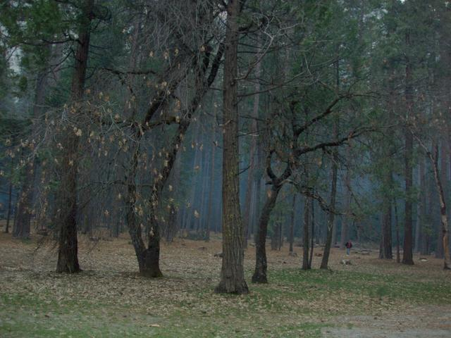 Upper Pines Campground Smoke