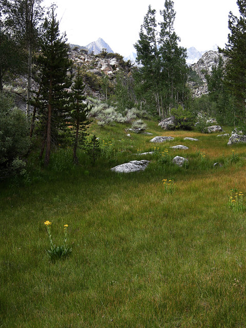 Small Meadow on North Lake Road