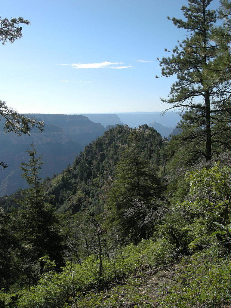 It's green at the North Rim