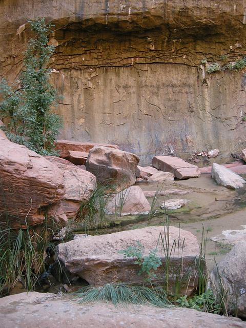 Weeping Wall and Pool, Zion National Park